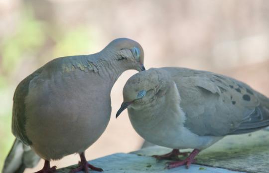 n bird