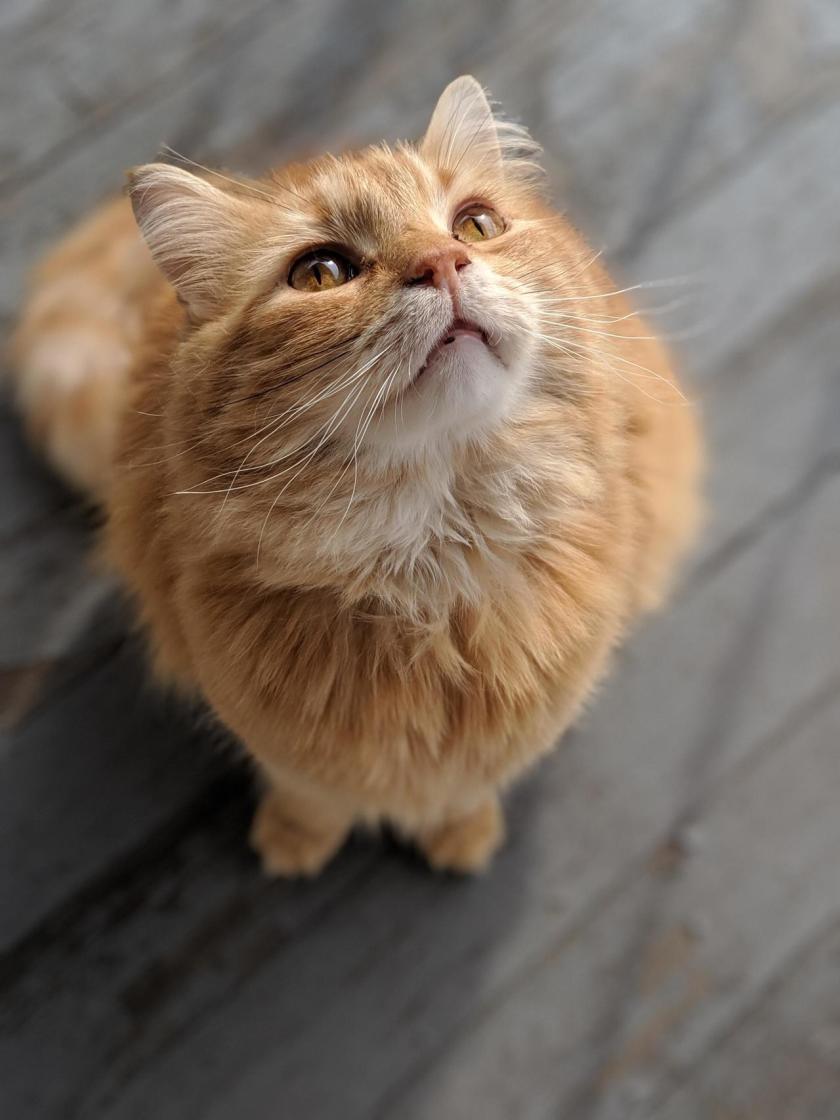 n cat