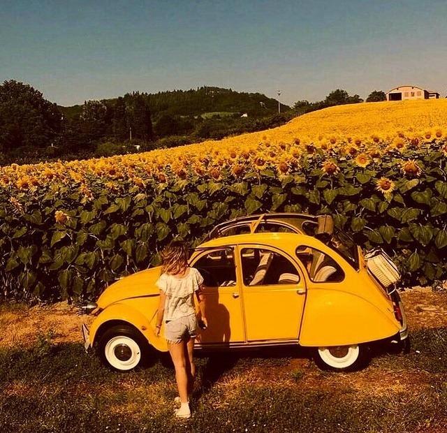 n sunflowers