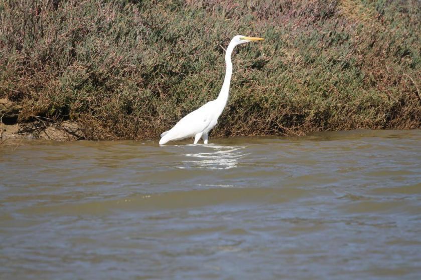 n white egret ka