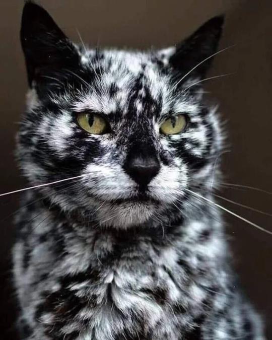 n cat11