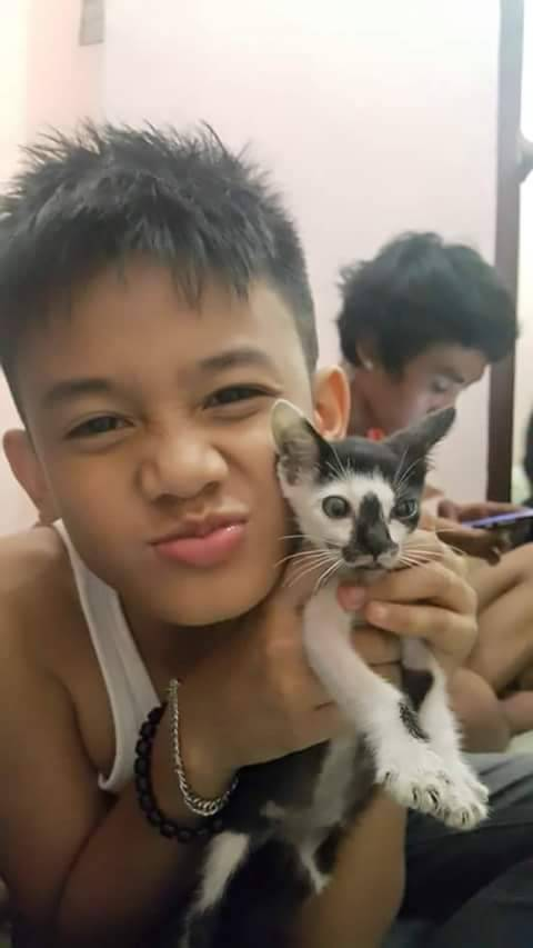 n catboy