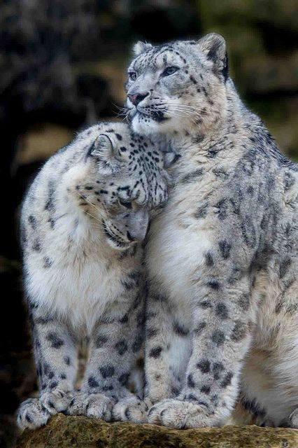 n kitty love
