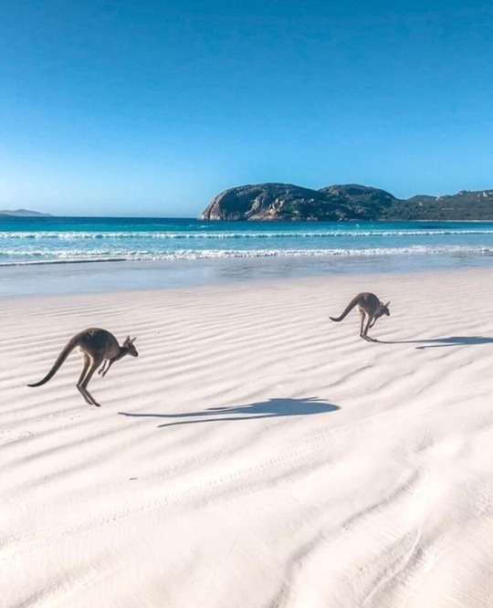 n kangaroos