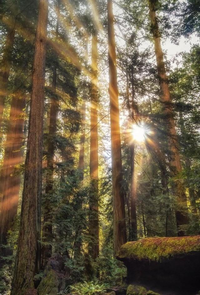 n sun in trees