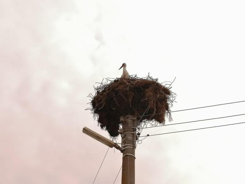 john stork