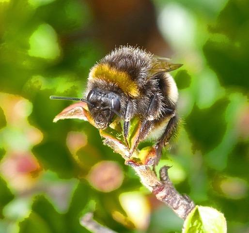 andi bee
