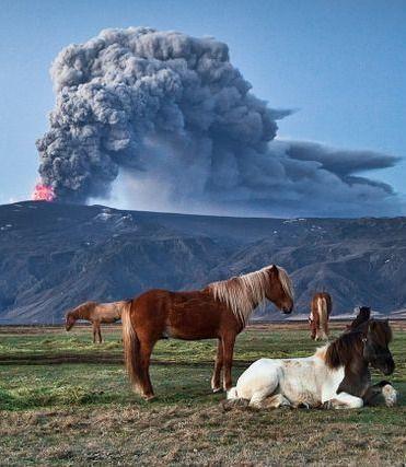 eadc4a46ebe8491a38f775b05cf8b72f--island-horse-pretty-horses