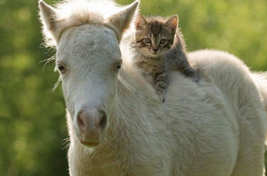 Cat-and-Horse